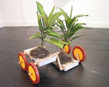 freesoil-plant
